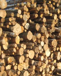 hard wood and soft wood logs